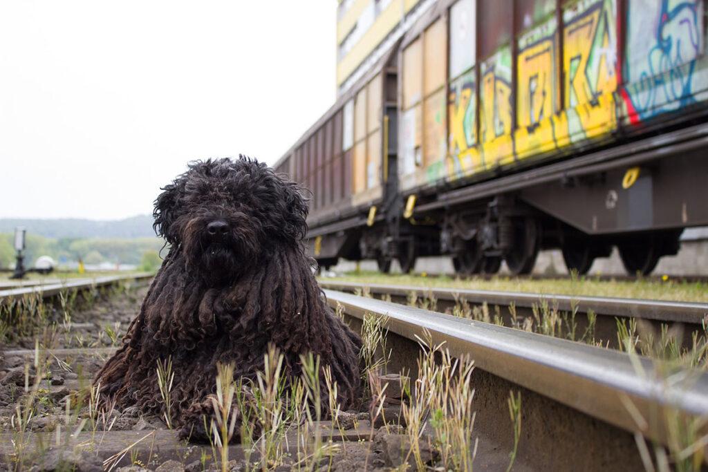 Bahnfahrt mit Hund